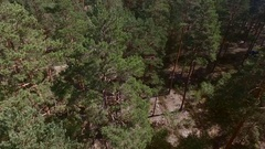 Quadcopter, the ascent from the pine forest Stock Footage