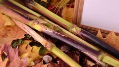 Autumn leaves, maple, viburnum, pine cone, acorn and nut on wooden Stock Footage