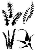 Silhouettes of different fern leaves Stock Illustration