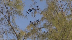 Crow bird rest in tree branch wild avian take off hunting birdwatching habitat Stock Footage