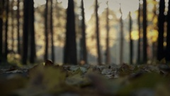 Autumn. Forest falling yellow leaves of trees. Blur Stock Footage