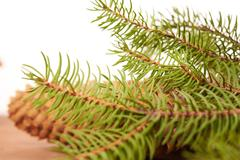 Spruce cones on a white background Stock Photos