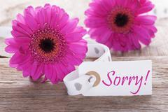 Pink Spring Gerbera, Label, Text Sorry Stock Photos