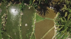 Flying over the rice fields in Indonesia Stock Footage