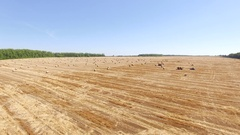 Harvest, reserves for the year, loading hay aerial view Stock Footage