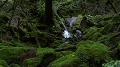 Forest in Yakushima, Kagoshima Prefecture, Japan Stock Footage