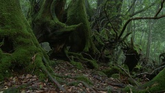 Forest in Yakushima, Kagoshima Prefecture, Japan Stock Footage