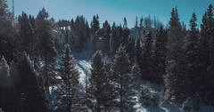 Pine trees in Carson National Forest, Tierra Amarilla, New Mexico, United States Stock Footage