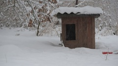 Dog runs to and then from kennel in winter Stock Footage