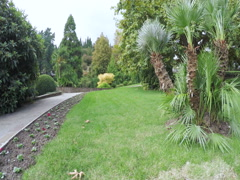 Concrete road in park Stock Footage