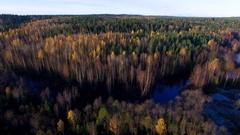 Karelian autumn forest Stock Footage