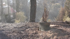 Outcome of the great fire in Haifa – a planter burned, exploded and smoldering Stock Footage