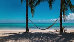 Hammock and palm trees on a exotic beach Stock Footage