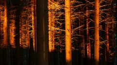 Light of a sunset reflected on trees Stock Footage