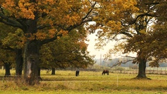 Horses taking rest under the tree Stock Footage