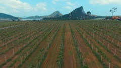 Aerial: Vineyards on Silver lake near Pattaya. Stock Footage