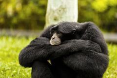Expressive monkey in captivity at the zoo Stock Photos