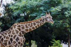 Zebra in a wildlife park, zoo safari Stock Photos