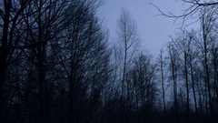 Gloomy dark trees in evening Stock Footage