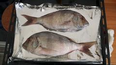 Bream fish in kitchen sink Stock Footage