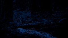 River Deep In The Woods At Night Stock Footage