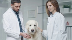 In Veterinary Clinic. Vet and His Assistant Examine the Dog with Stethoscope. In Stock Footage