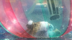 Children flounders inside large inflatable balls Stock Footage