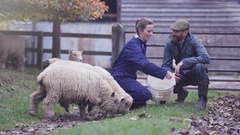 4K Farming couple talking & taking care of flock of sheep in the field Stock Footage