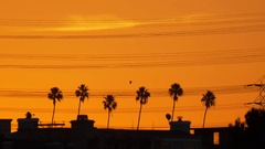 Palm trees and high tension power lines at sunset. Stock Footage