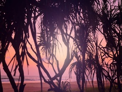 Sunset on tropical ocean coast with exotic plants and palm trees silhouettes Stock Footage