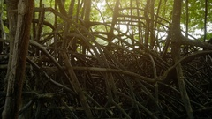 Roots and branches of tropical mangrove trees on sea coastline in Thailand Stock Footage