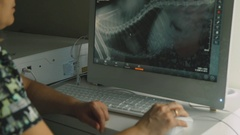 Screen computer monitor: X-ray of an animal Stock Footage