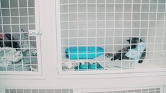 Cat in the cage at the veterinary clinic after sterilization Stock Footage