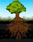 Tree and root in ground Stock Illustration