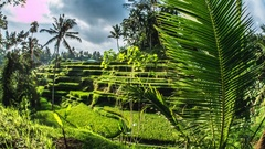 Rice Terraces Bali Indonesia Tegalalang Timelapse 4k Stock Footage