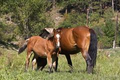 Small foal and mare Stock Photos