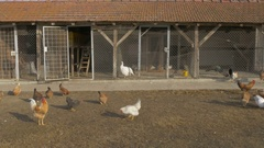 Hens and roosters pecking in the yard in front of chicken coop by Pakito. Stock Footage
