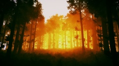 4K Wonderful Epic Evergreen Forest in the Sunset Cinematic 3D Animation 2 Stock Footage