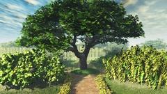 Garden of Herbs 3D Animation Stock Footage