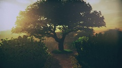 Garden of Herbs in the Sunset 3D Animation 2 Stock Footage