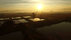Aerial view of  paddy field in agricultural area with sun rising sky Stock Footage