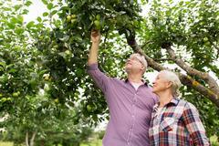 Senior couple with apple tree at summer garden Stock Photos