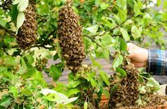 Swarm of bees Stock Photos