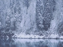 Winter Snow Coniferous Forest and lake wild landscape with snowfall Travel Stock Footage