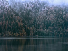 Foggy Coniferous Forest and lake wild woods landscape Travel Stock Footage