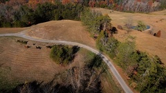 Aerial View. Flying over the beautiful running horses. Stock Footage