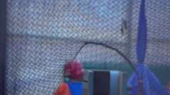 A vintage pitching machine throws a yellow baseball towards a batter during batt Stock Footage
