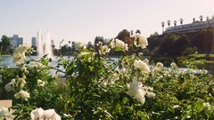 Los Angeles Echo Park Roses Fountain Bench Couple Love 4K Stock Video Footage Stock Footage
