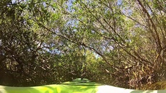 Relaxing ride on Kayak through a mangrove tunnel in Florida Stock Footage