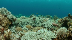 Coral bleaching Stock Footage